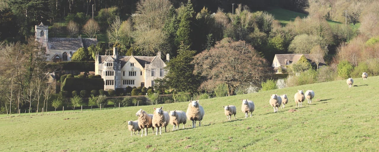 Owlpen Manor sheep in spring Cotswolds